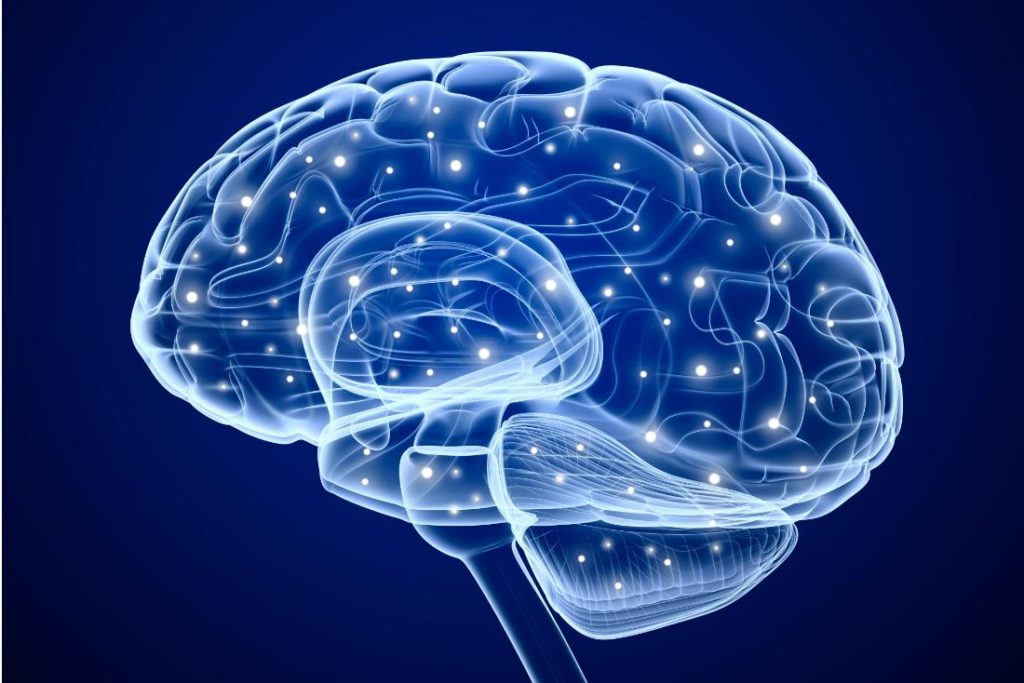 Brain Neuroplasticity – and how to grow new brain cells by exercising your brain.