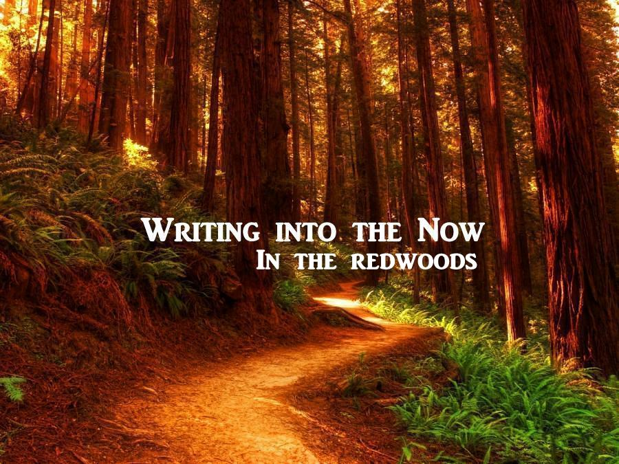 """Writing Into The Now"" workshop in the redwoods. June 2, 2018"
